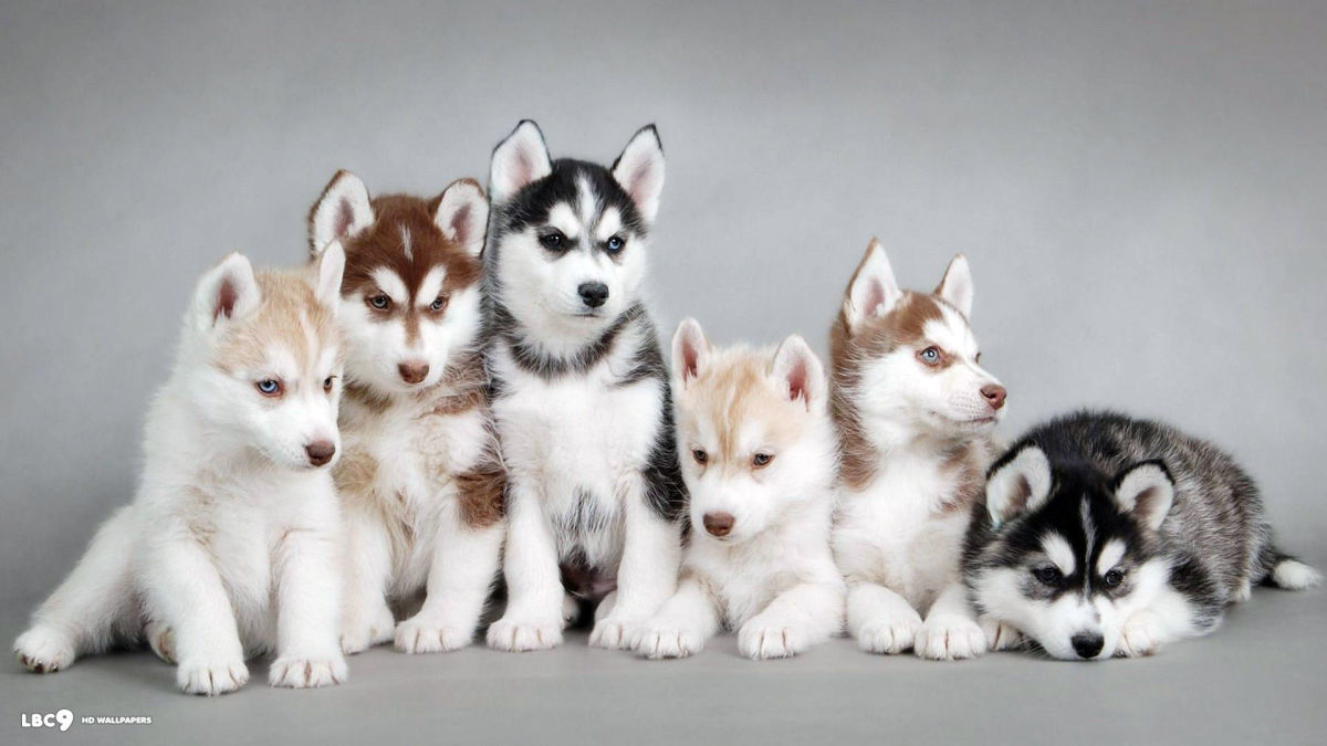 5-most-beautiful-dog-breeds-in-the-world.jpg (1200×675)