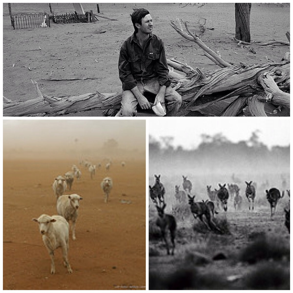 Effects of drought- collage