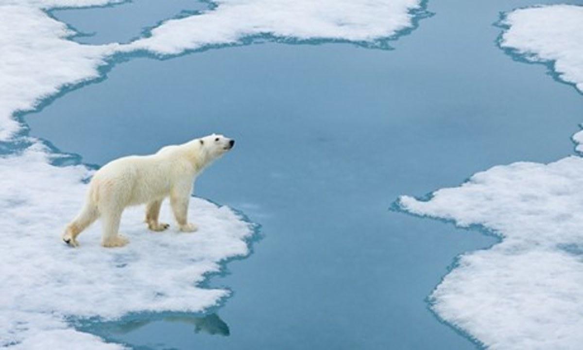 Melting ice caps threaten habitat