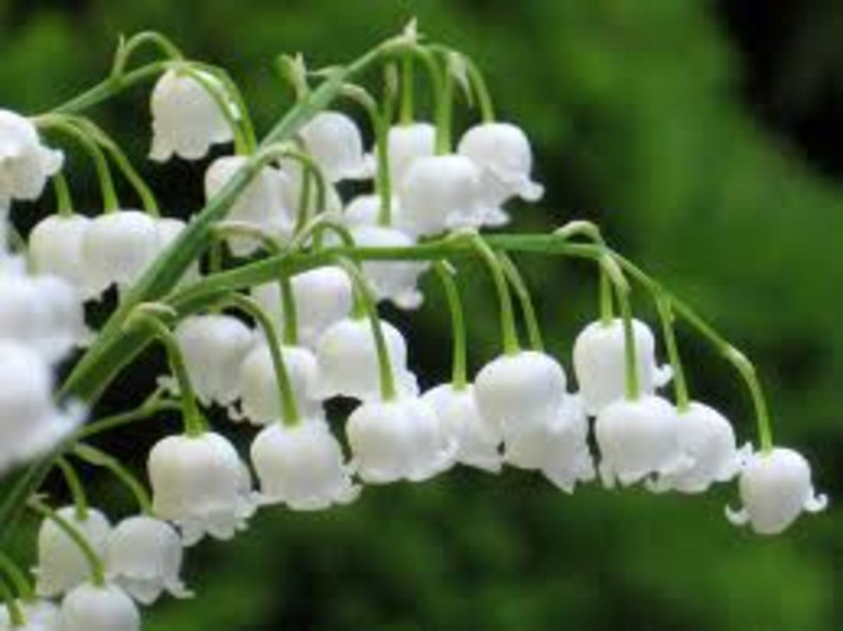 The scent of Lily of the Valley filled the room