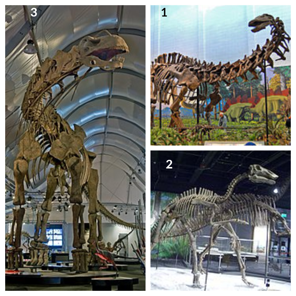 1. Aptosaurus Dinosaur  2. Argentinasaurus Dinosaur 3. Bactrosaurus Dinosaur
