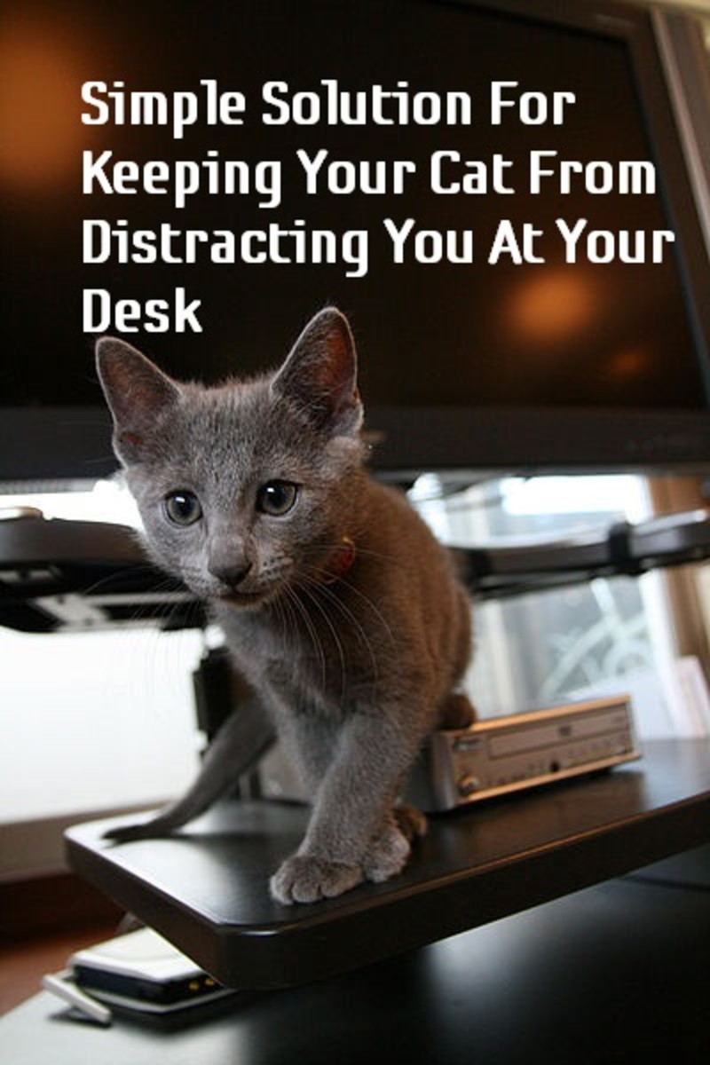 How To Keep Your Cat Off Your Computer Keyboard and Workspace