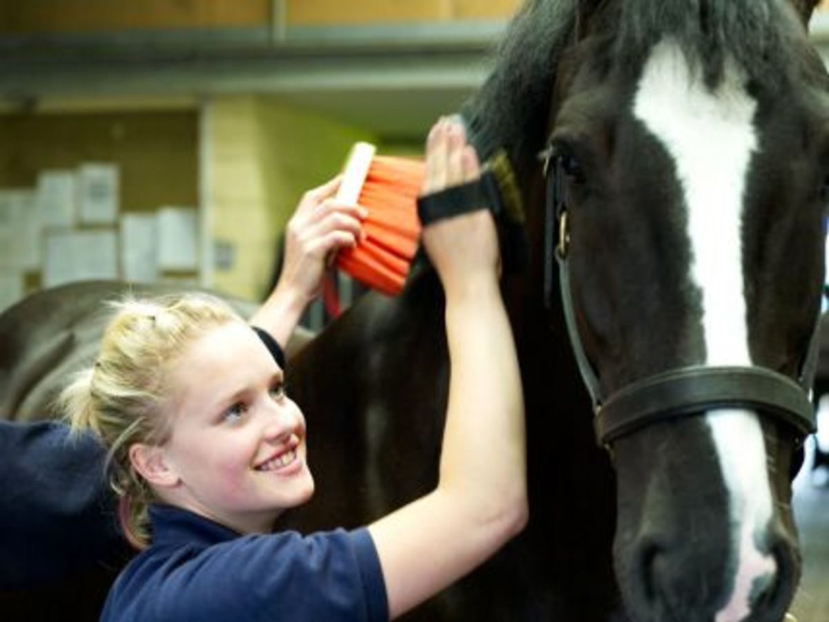 Top 5 Horse Care Tips