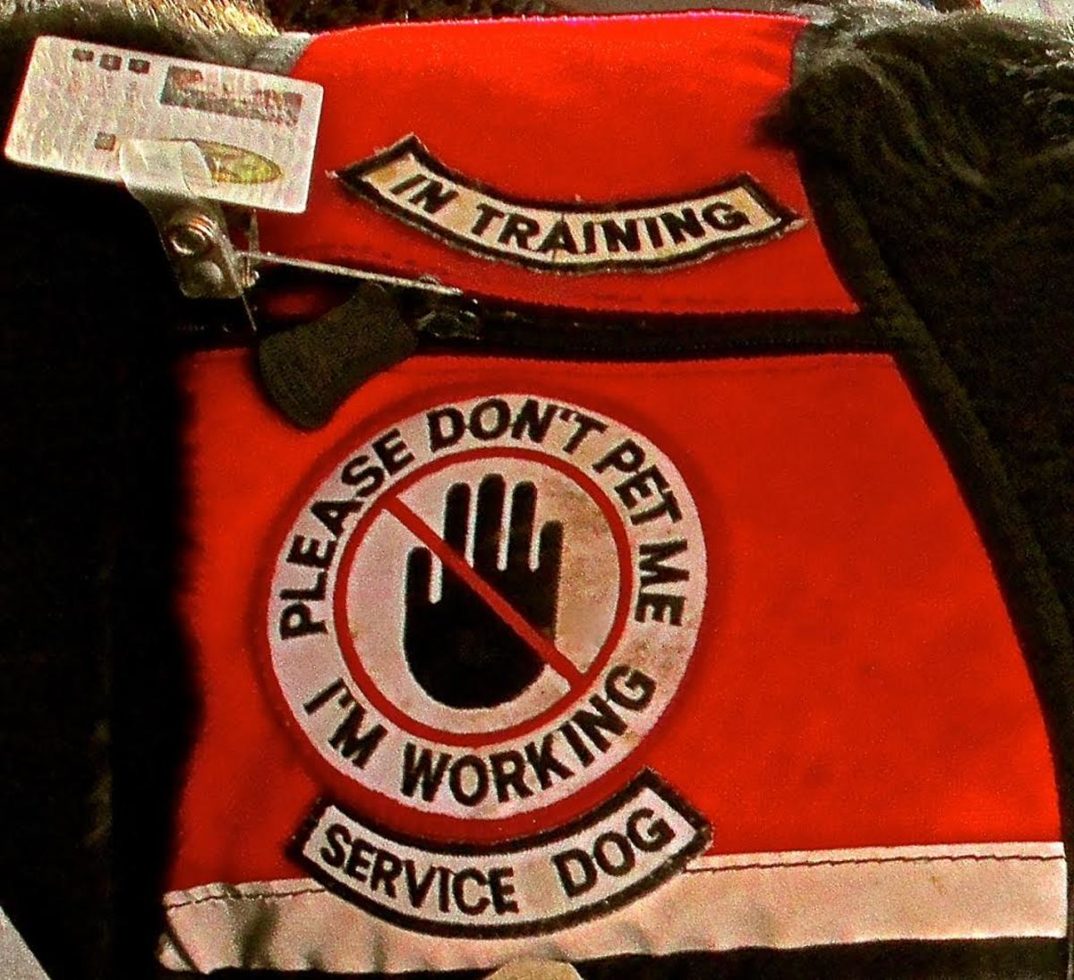 "Service dog's vest says, ""Please Don't Pet Me, I'm Working"""