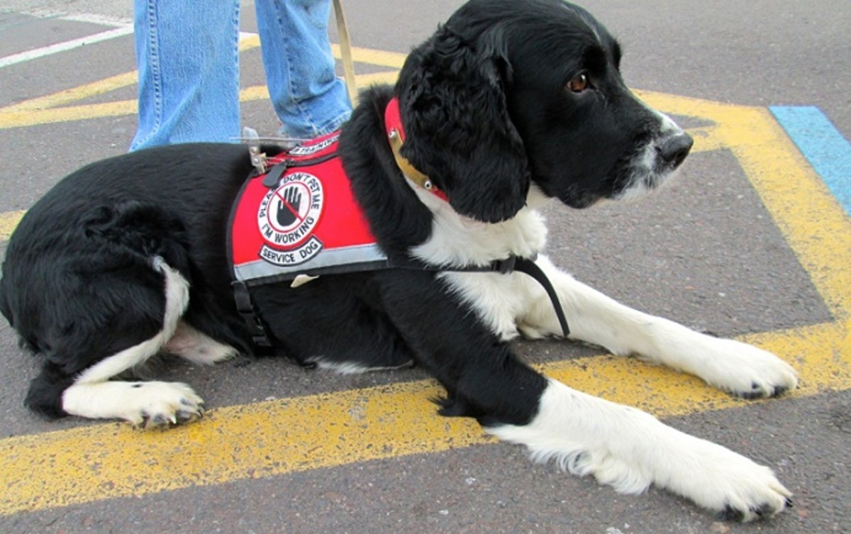 Please Do Not Pet Service Dogs On Duty