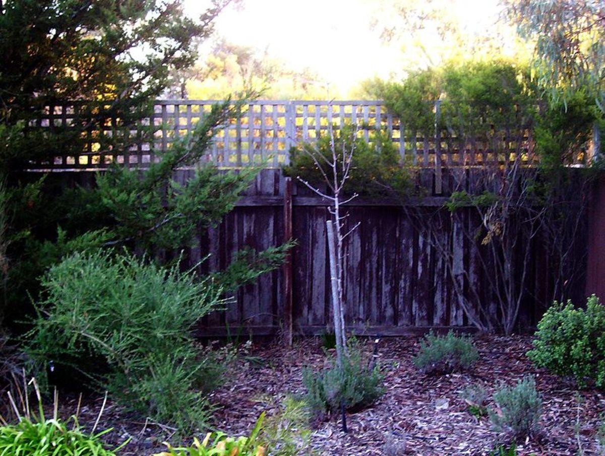 Fence Enclosing a Garden