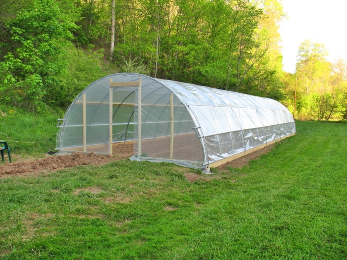 Greenhouse protected from wind by trees
