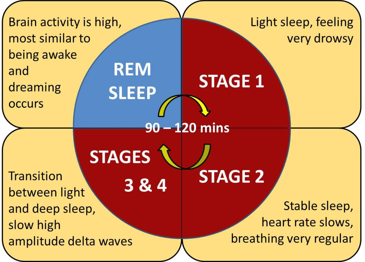 dreams dreaming and phases of sleep Webmd talks about dreams: what makes us dream, if dreams mean anything, what lucid dreaming is, and more in your dreams, dreams and sleep.