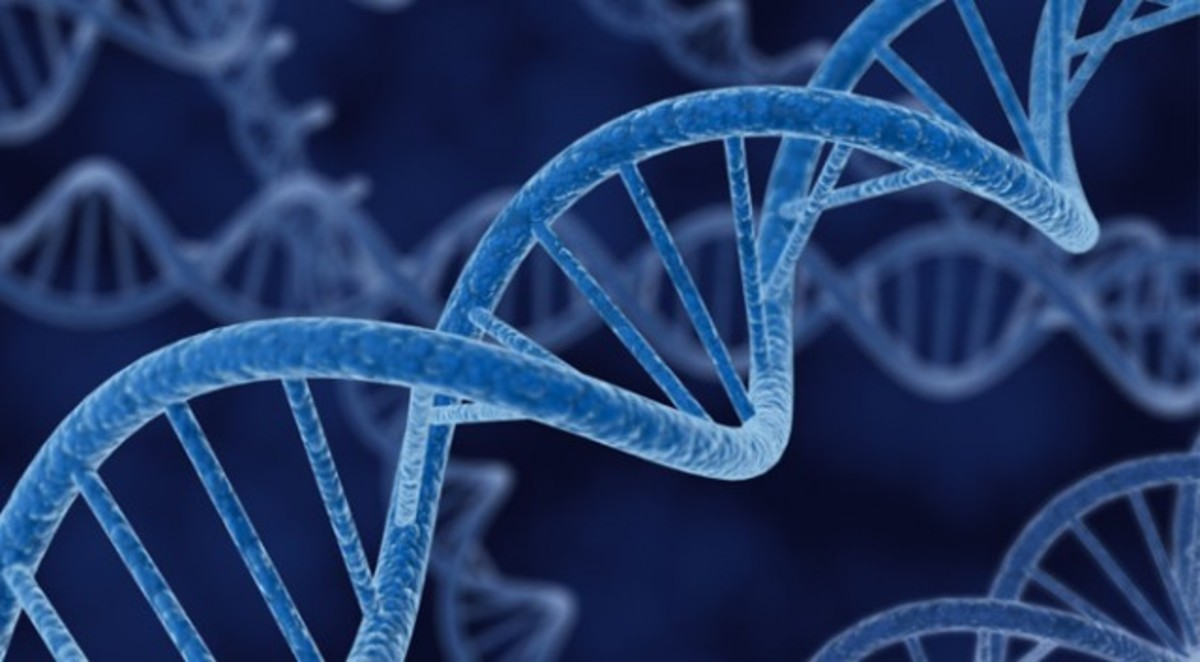Notice the nitrogenous bases connecting the double helix (strands) of DNA like rungs on a ladder.