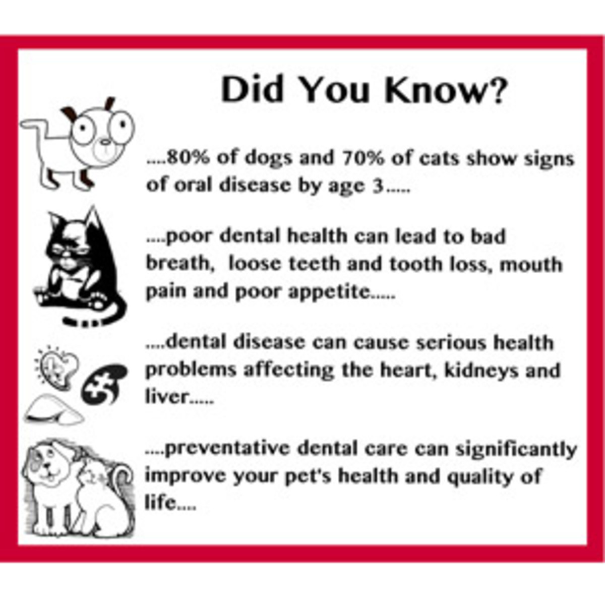 Important tips for dog and cat owners: take care of your pet's teeth!