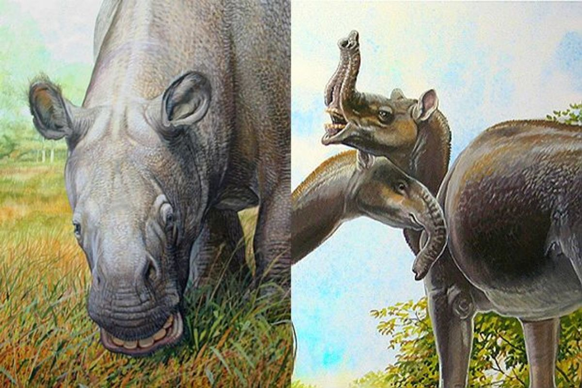 The notoungulate Toxodon (left) and the litoptern Macrauchenia (right), both of which vanished around ten thousand years ago. Art by Peter Schouten.