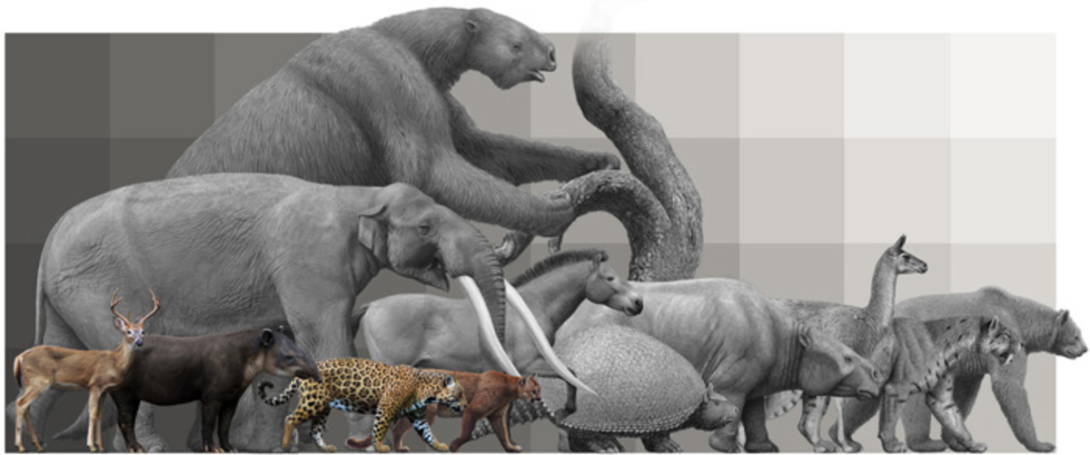 South America's megafauna, Pleistocene and present, by Mauricio Anton.