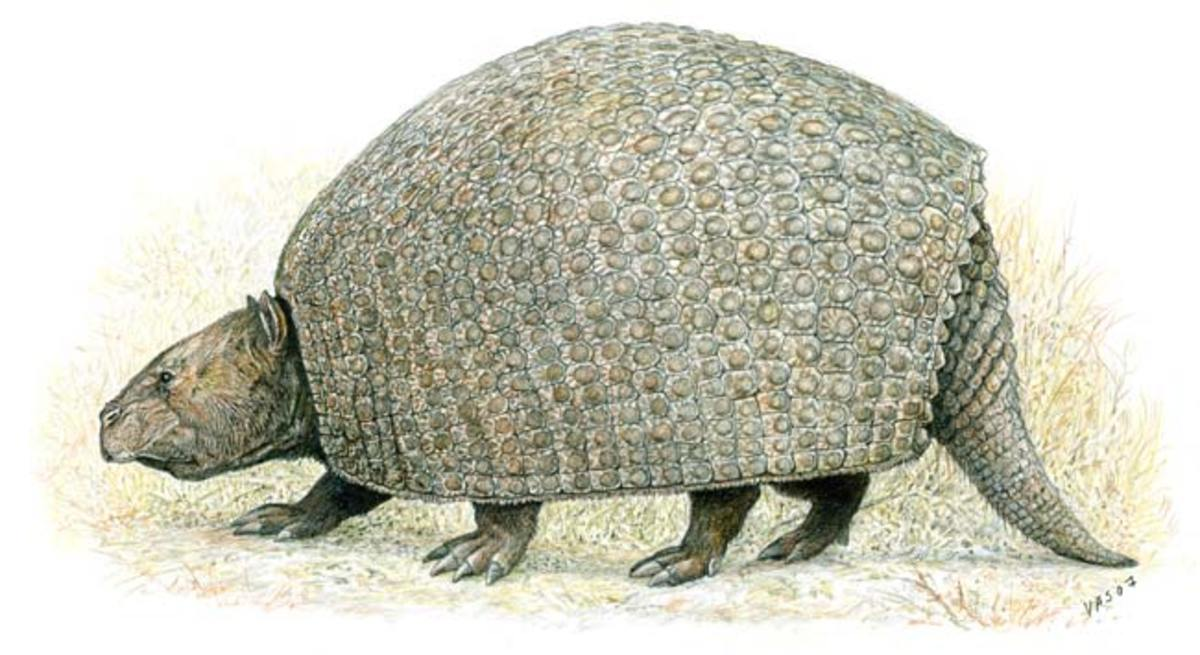 Parapropalaehoplophorus, one of the earliest and smallest known glyptodonts, as depicted by Velizar Simeonovski.