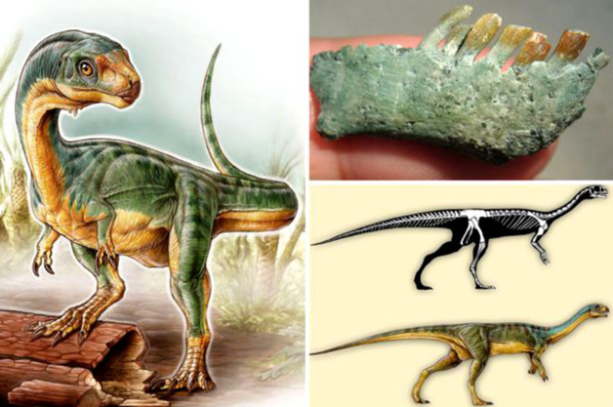 (Clockwise from top) Chilesaurus jaw, projected skeleton, and in the flesh, as depicted by Gabriel Lio.