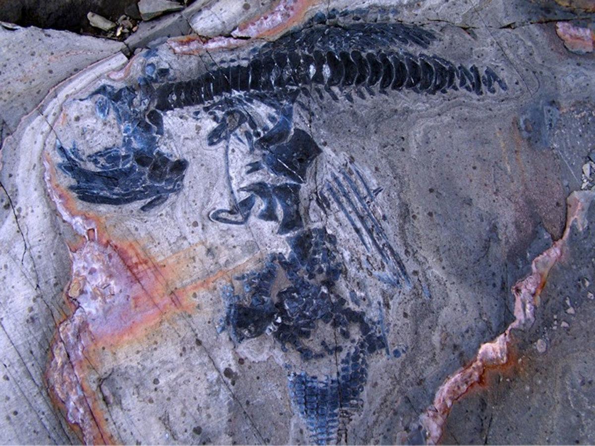 Ichthyosaur skeleton at Torres del Paine National Park.