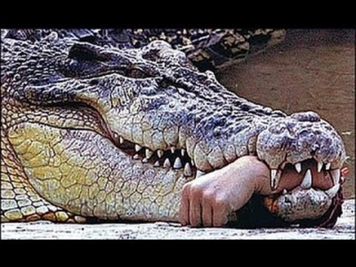 The croc's way