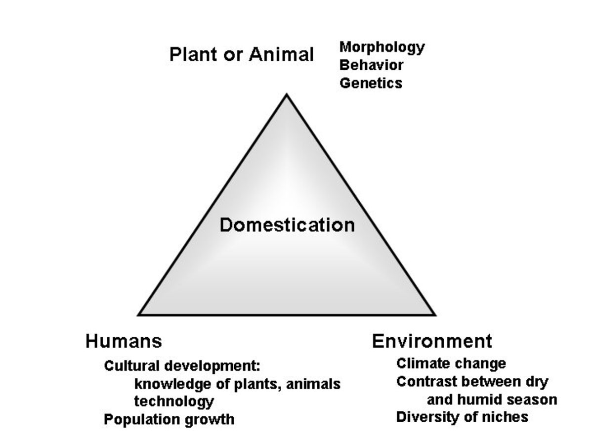 Domestication Triangle ,                                                                         Gepts, 2004