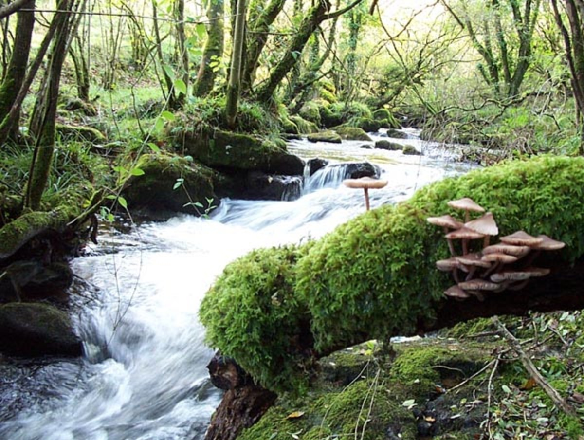 Upland Stream- Cool and refreshing water