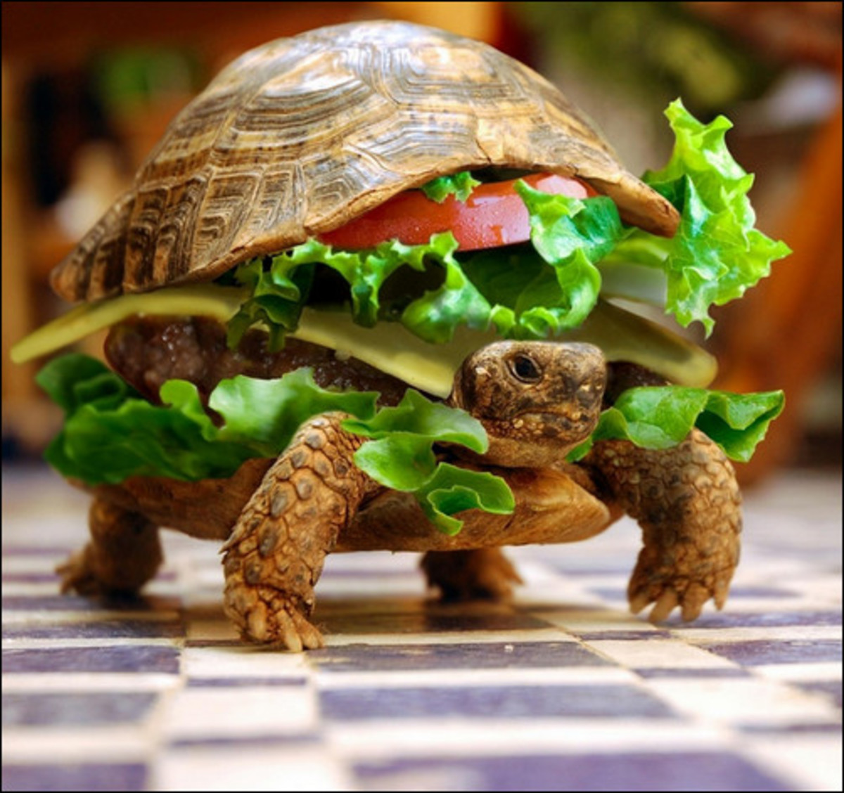 """ Delicious""  Turtle Burger"