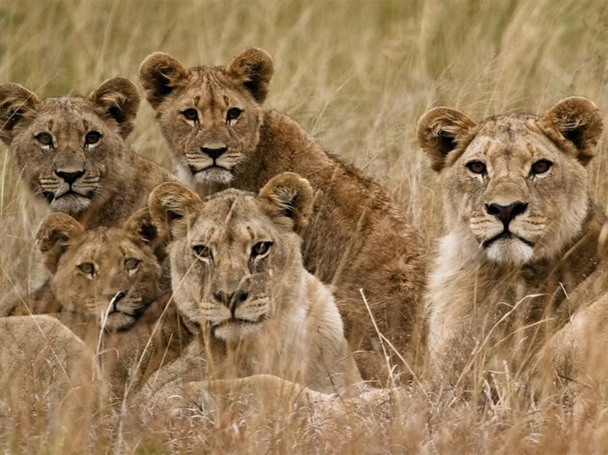 CUTE looking predators-Beware of SUPERKILLERS. Source: National Geographic