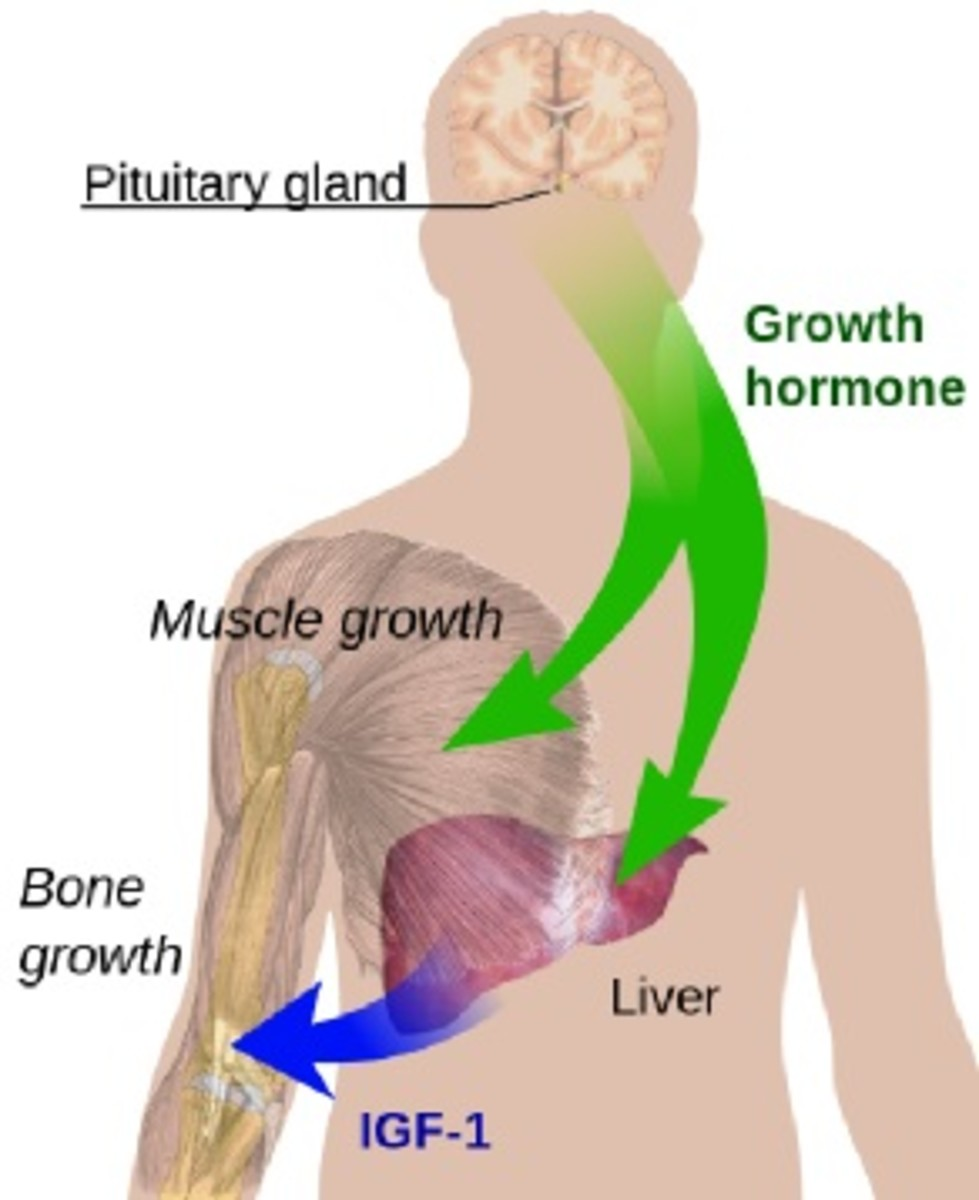 what-is-pituitary-dwarfism-causes-and-effects