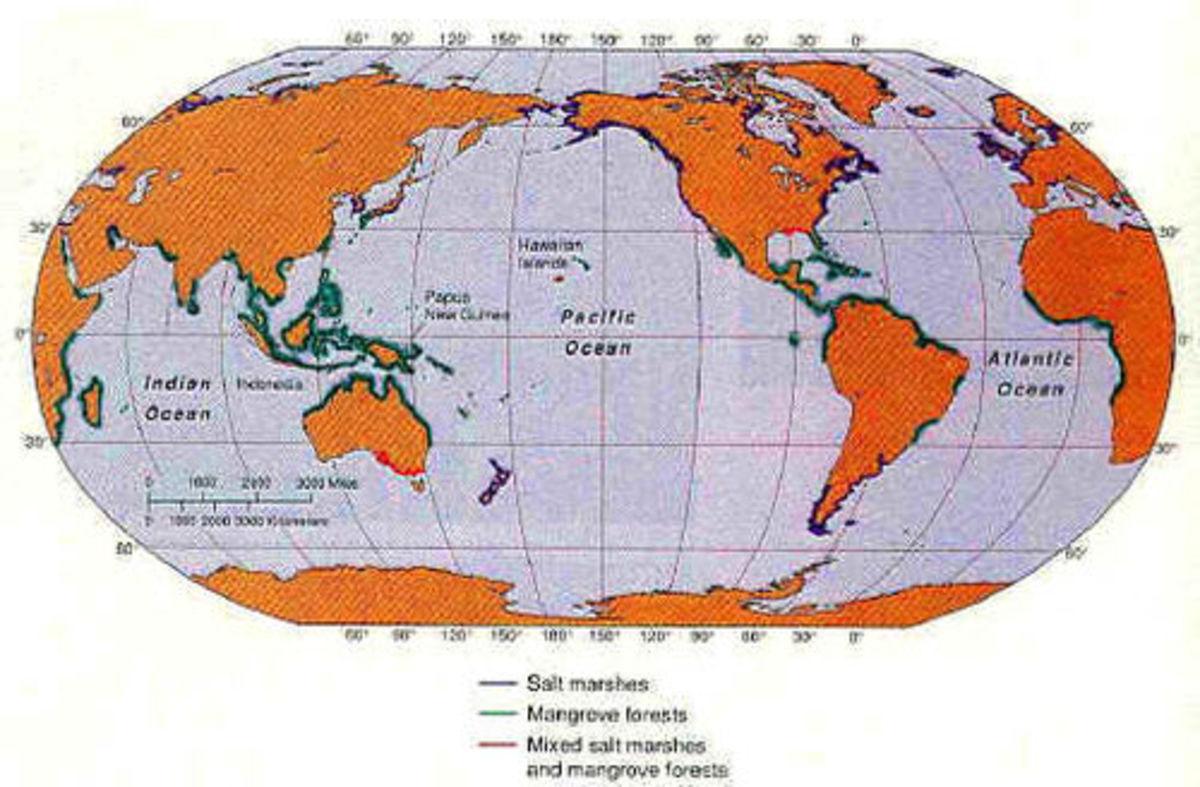 Mangrove of the World Source: www.coastalwiki.org
