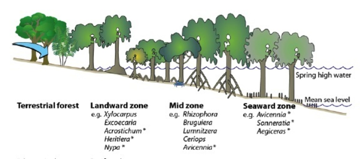 Mangrove Zonation