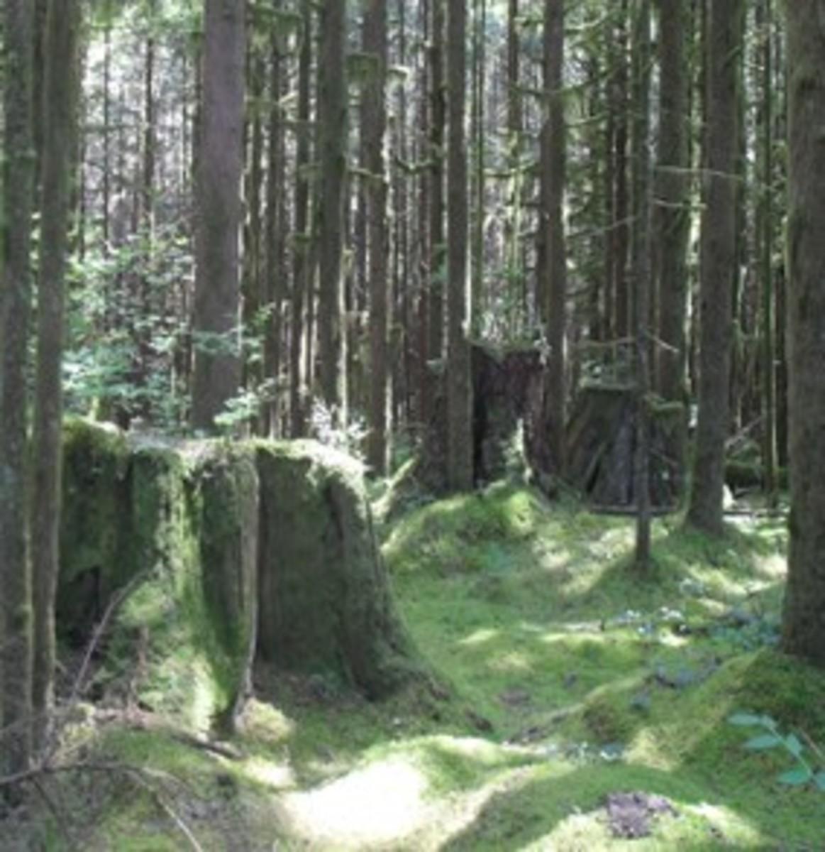 stumps of giants
