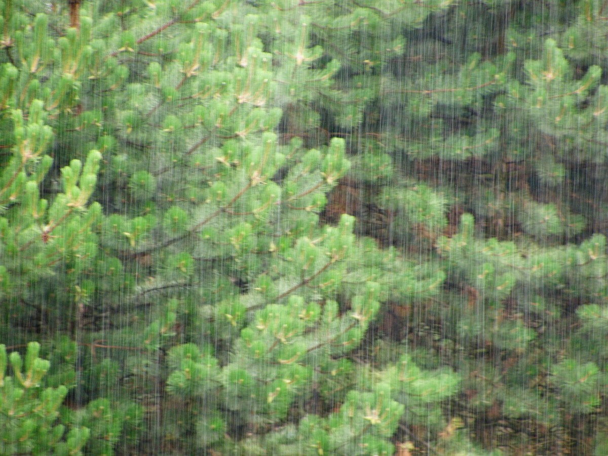 Rain falling through trees is a soothing sound