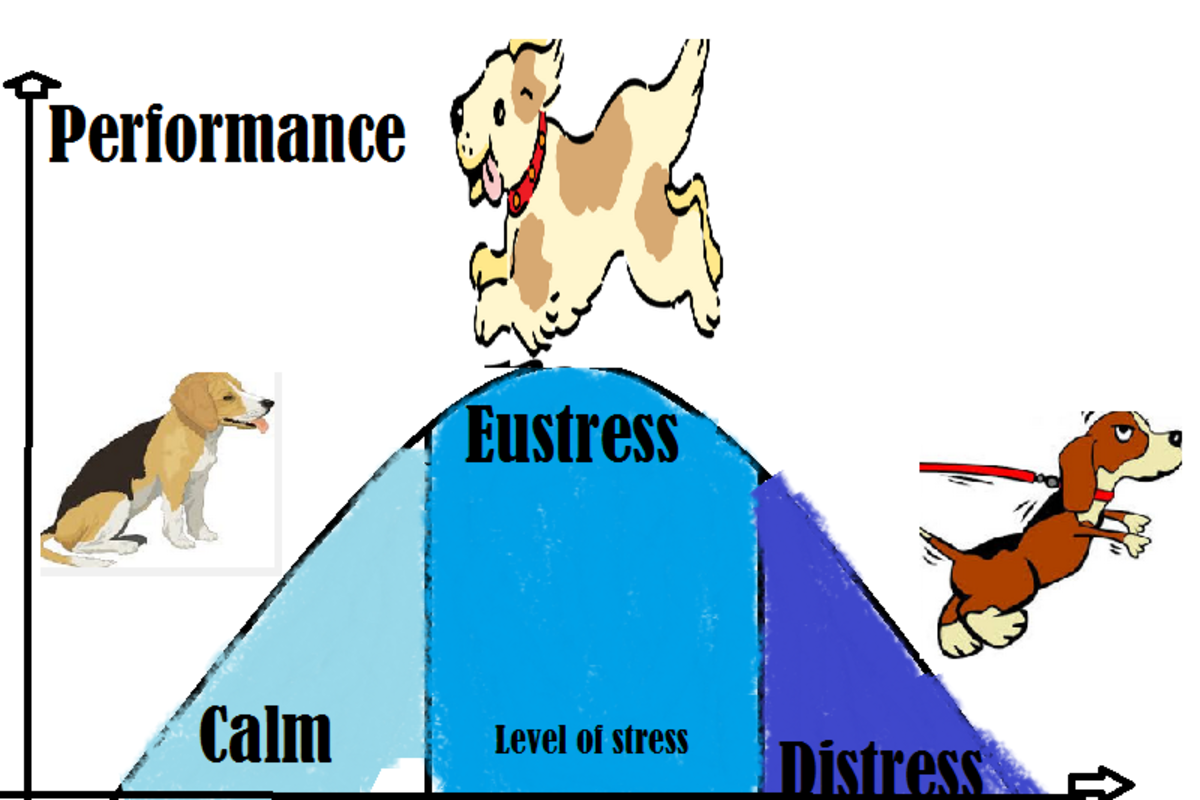 stressed-out-dogs-suffer-from-eustress-too