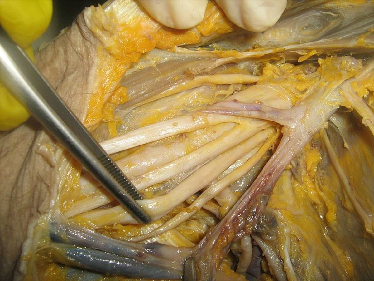 multiple-choice-questions-anatomy-of-axilla