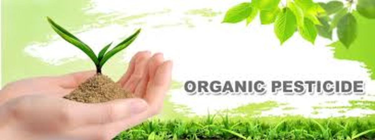 prepare-homemade-organic-pesticides