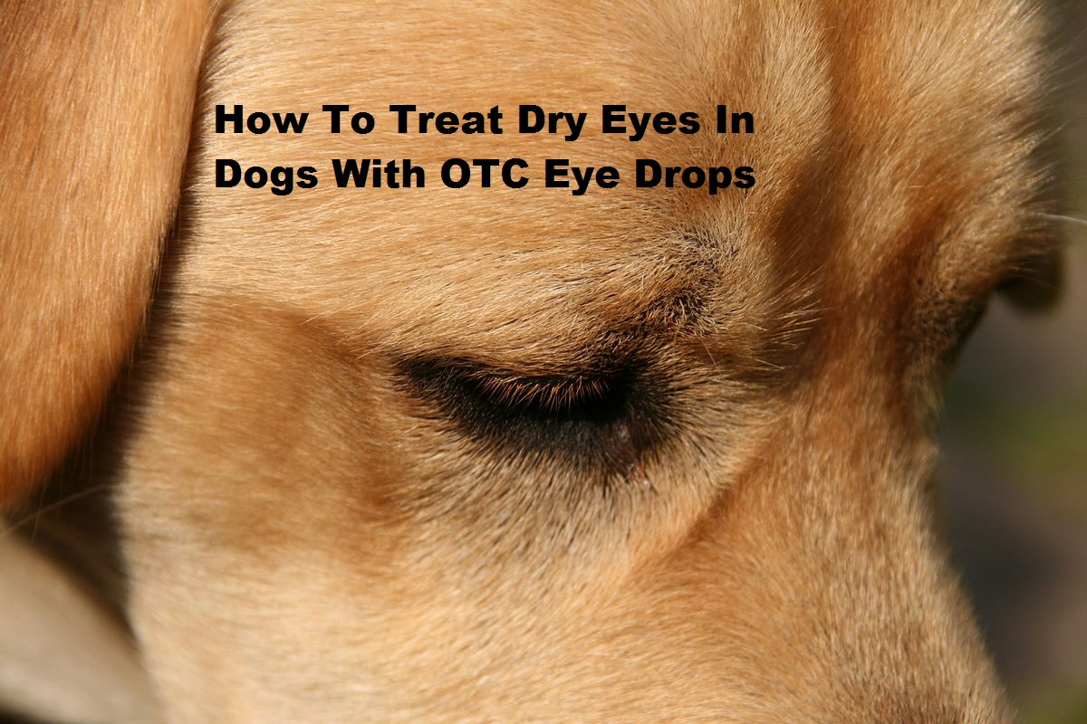 Dogs can have simple eye problems such as chronic dry eyes than can easily be treated OTC.