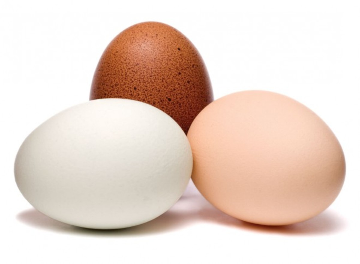 Different type of Eggs