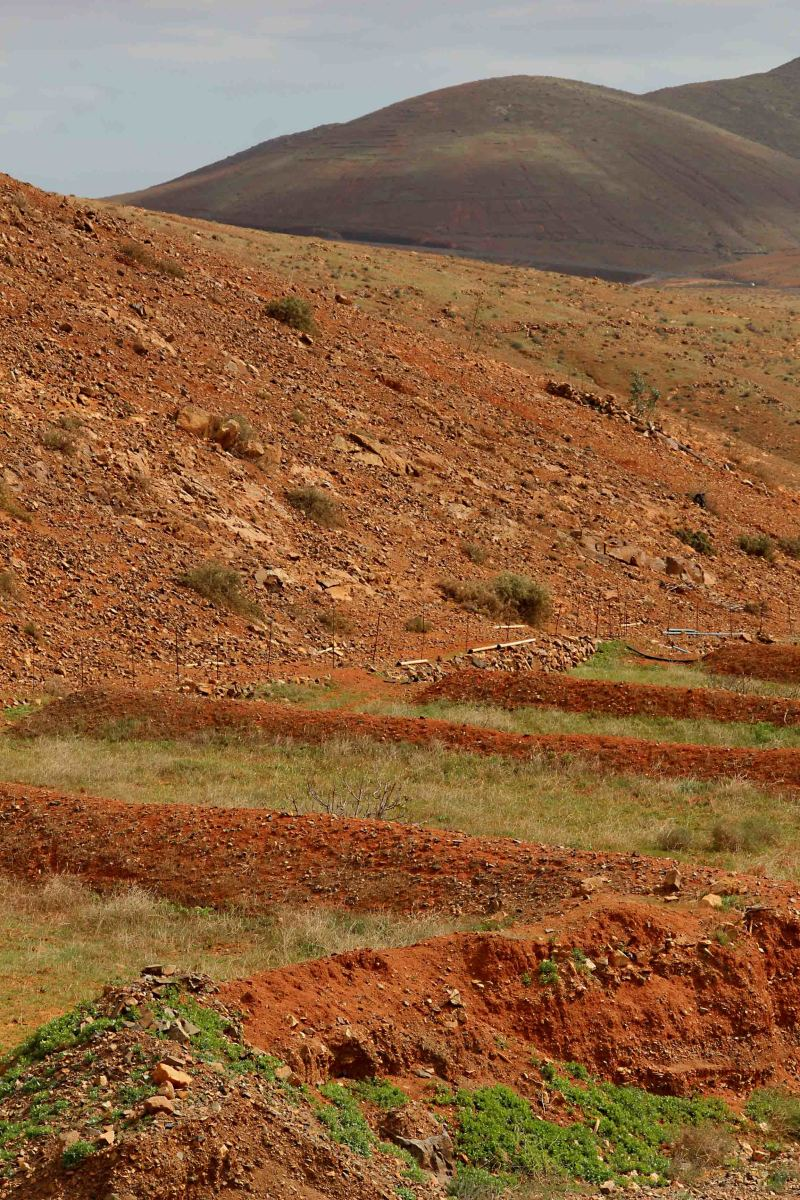 The countryside in Central Fuerteventura. Note  the natural wind breaks on the agricultural land in the foreground