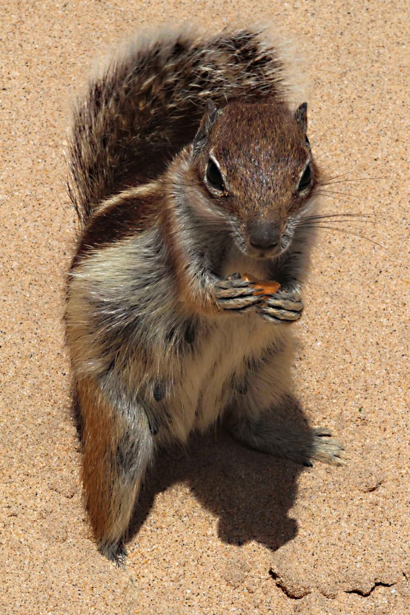 One of the squirrels attracted by the nuts I bought at a local resort grocery store
