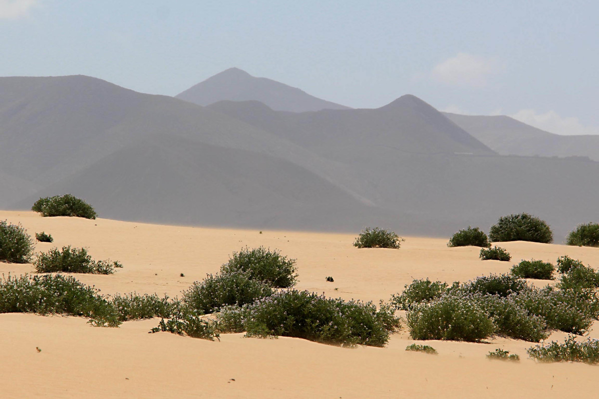 A wide expanse of sand dunes line the beaches of the northeast near Corralejo, but reach far inland too