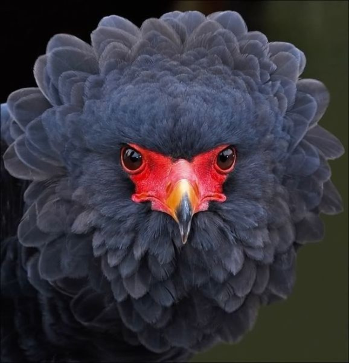 How about a bird that looks like a flower?