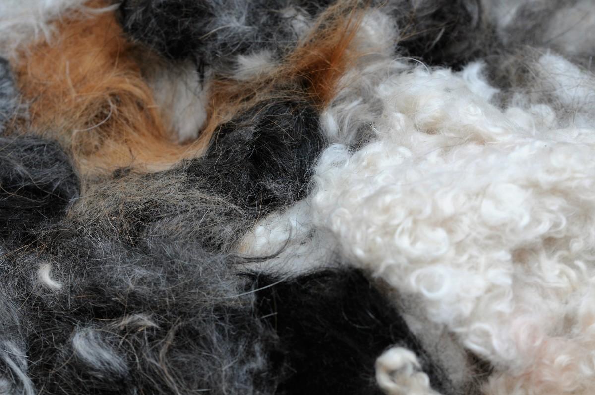 A variety of dog hairs