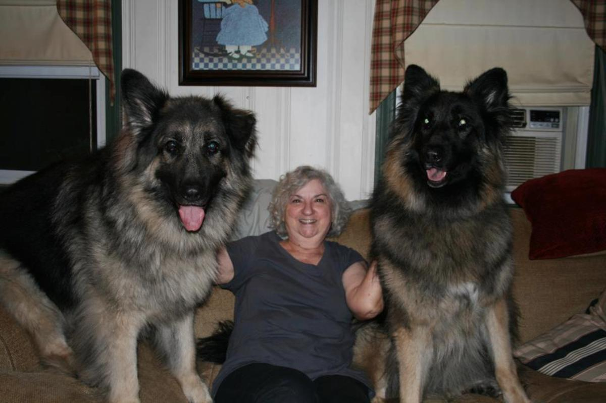 five-largest-american-dog-breeds