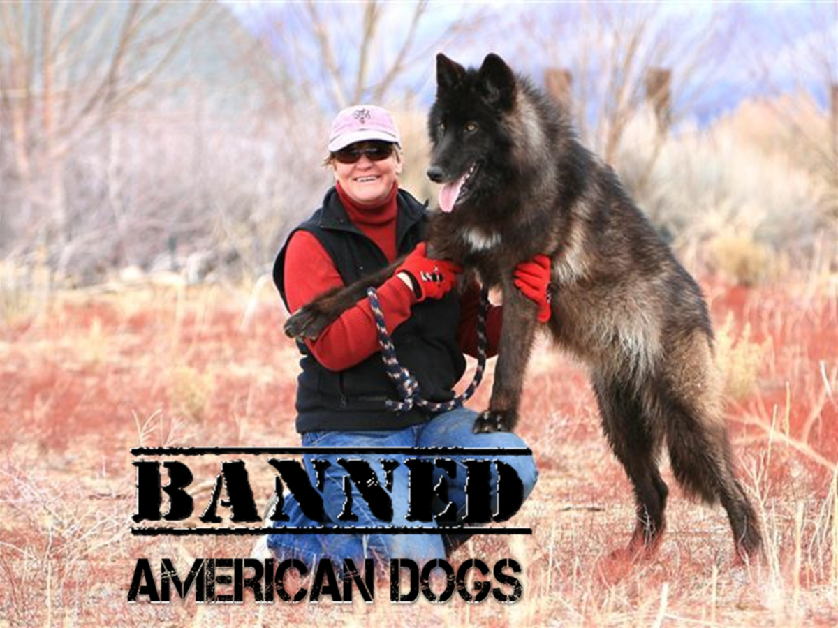 Five American Dogs Banned in Other Countries