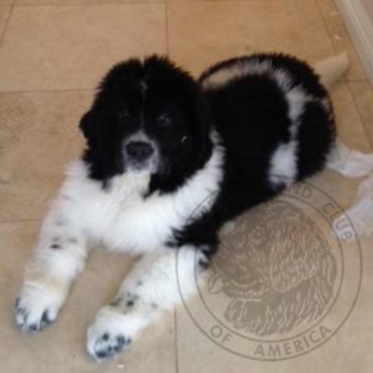 puppy-101