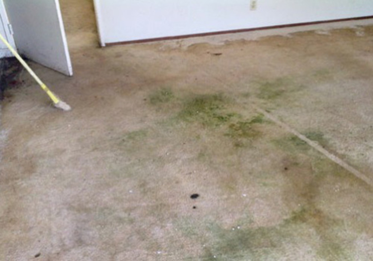 If  Left Untouched, Water Can Cause Irreparable Damage to Your Carpet