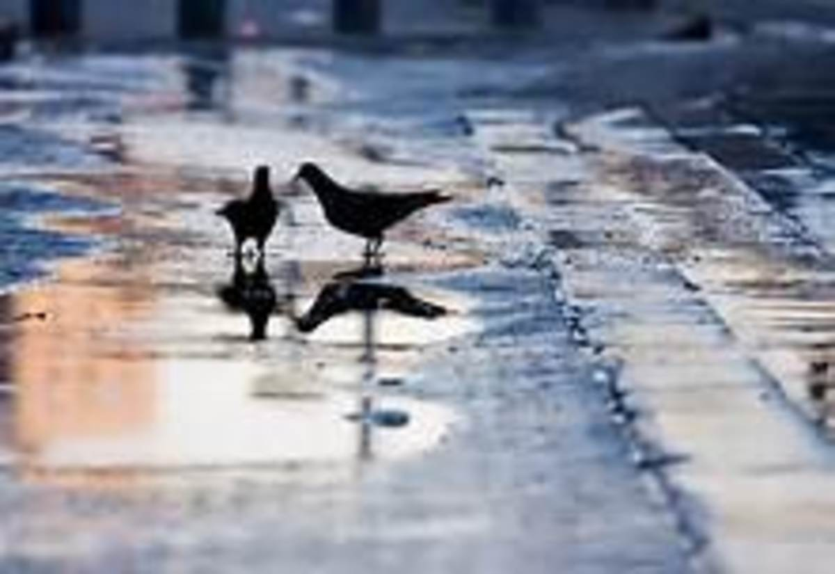 Birds love the puddles left behind after a rainfall.