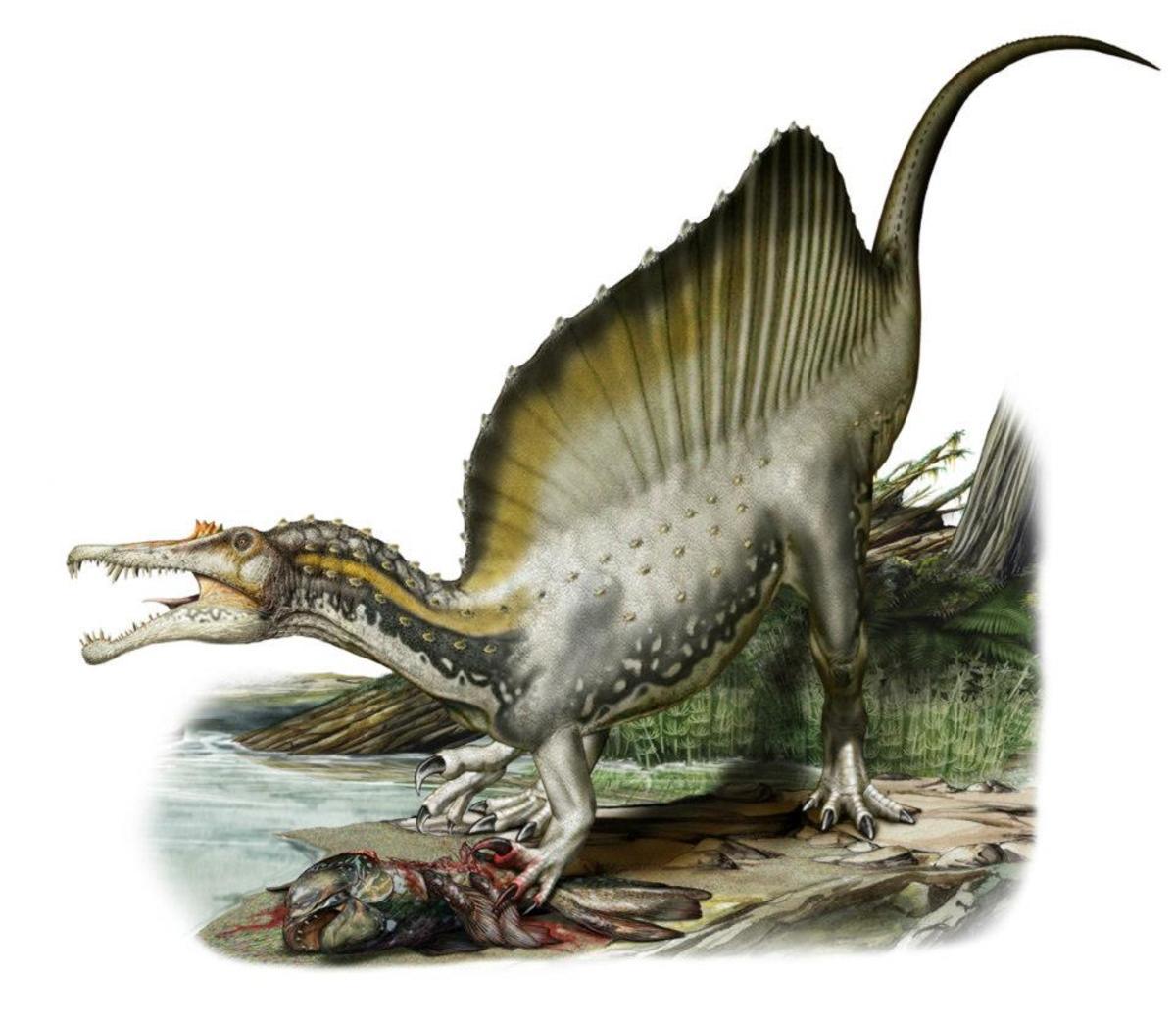Spinosaurus slashing into a coelacanth, by Davide Bonadonna.