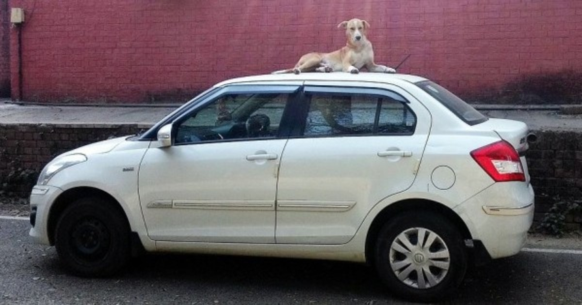 Dog sitting on top of the czr