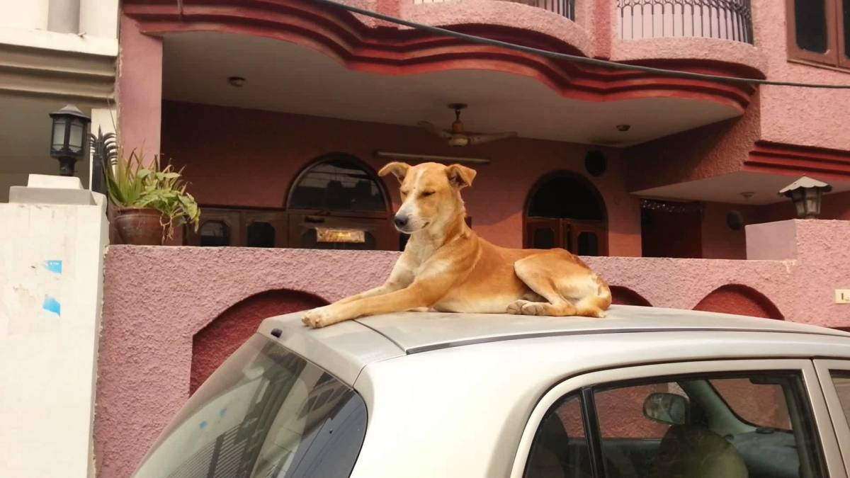 Dog sitting on car