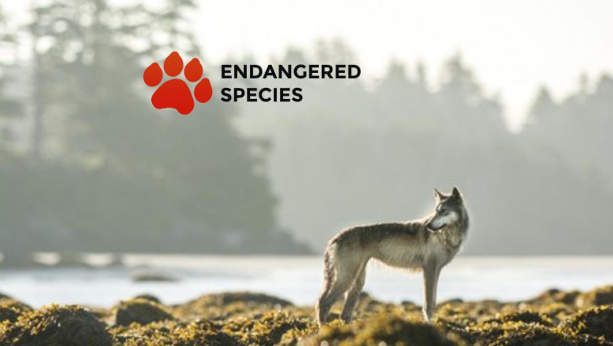 20 Extinct or Endangered Wolves