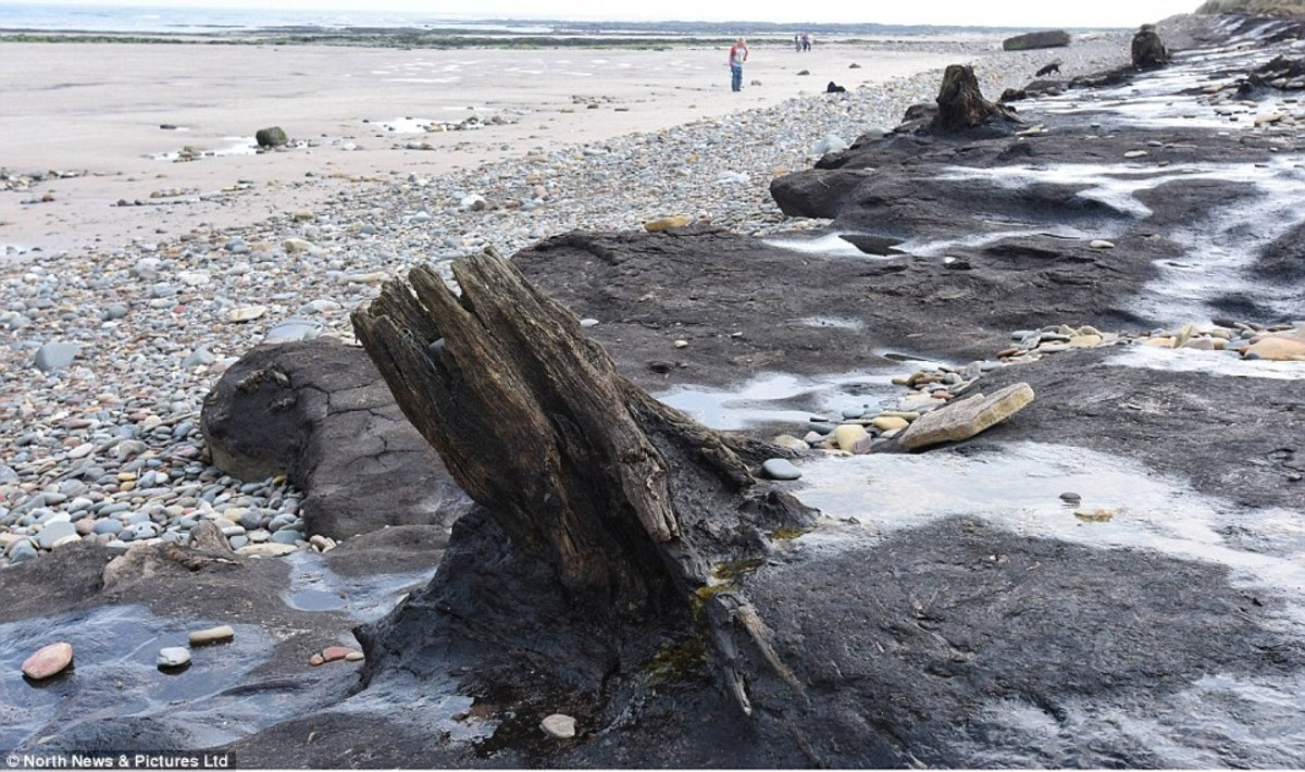 Remains of Stone Age forest now uncovered