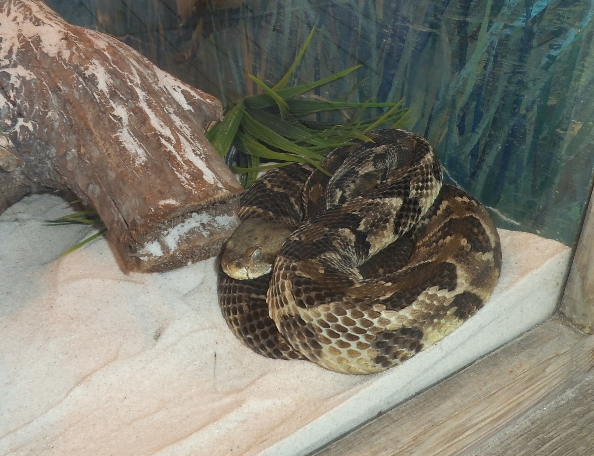 Behind glass panels, you can see various Florida snakes.